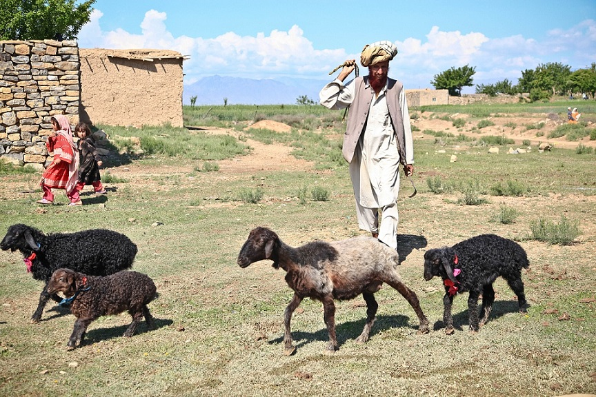 Afghani shepherd_Afghanistan_PD