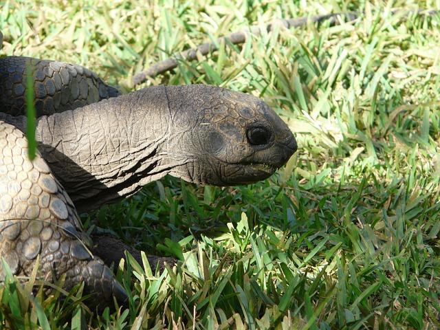 giant-tortoise_botanical garden_Mauritius_PD
