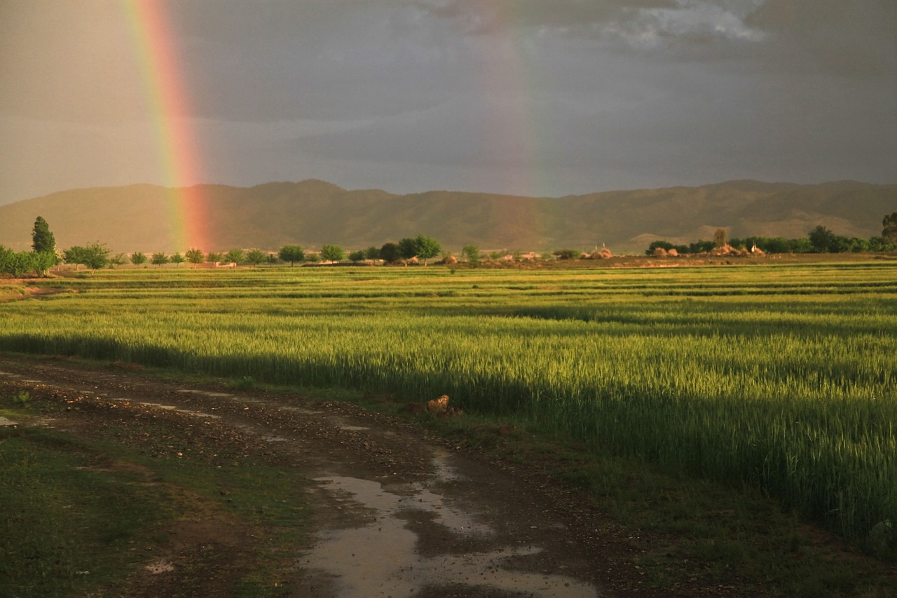 rainbow field_afghanistan_PD