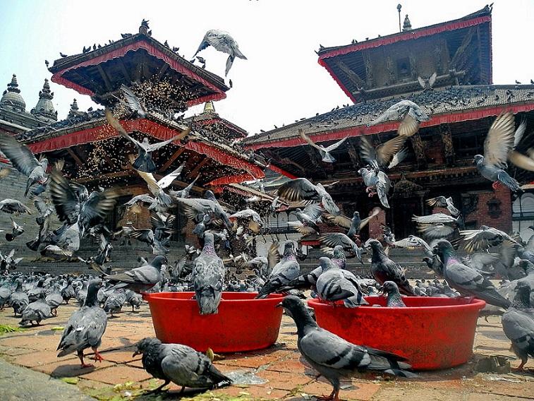 Kathmandu valley temple_Nepal_PD