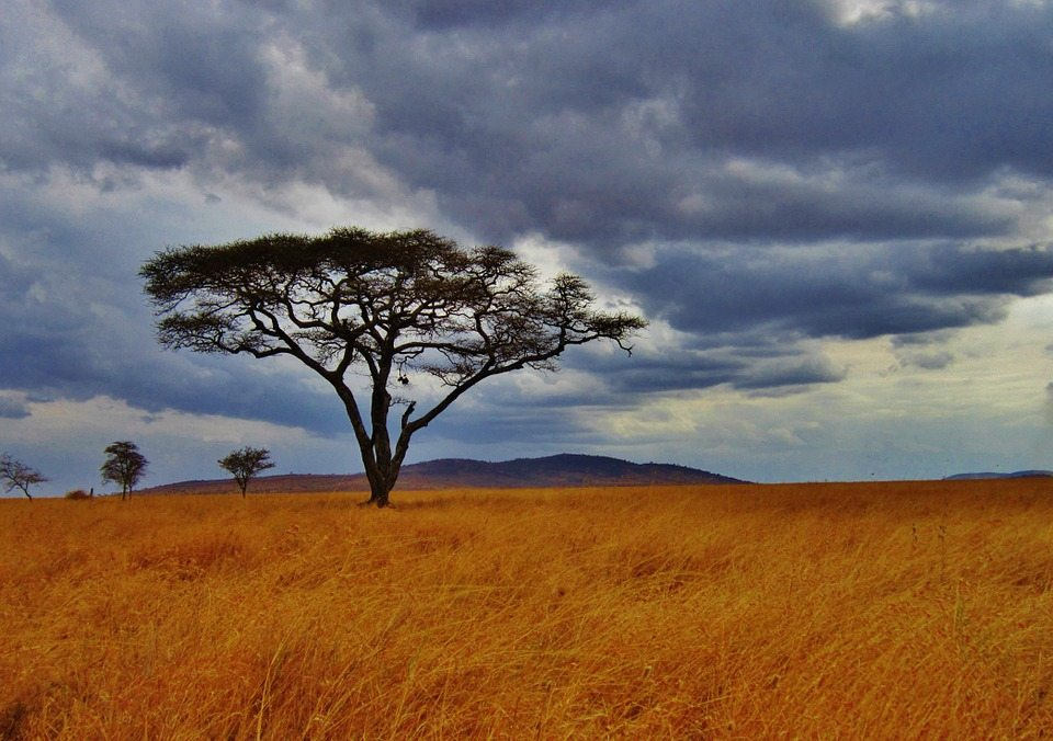 fun facts about Tanzania
