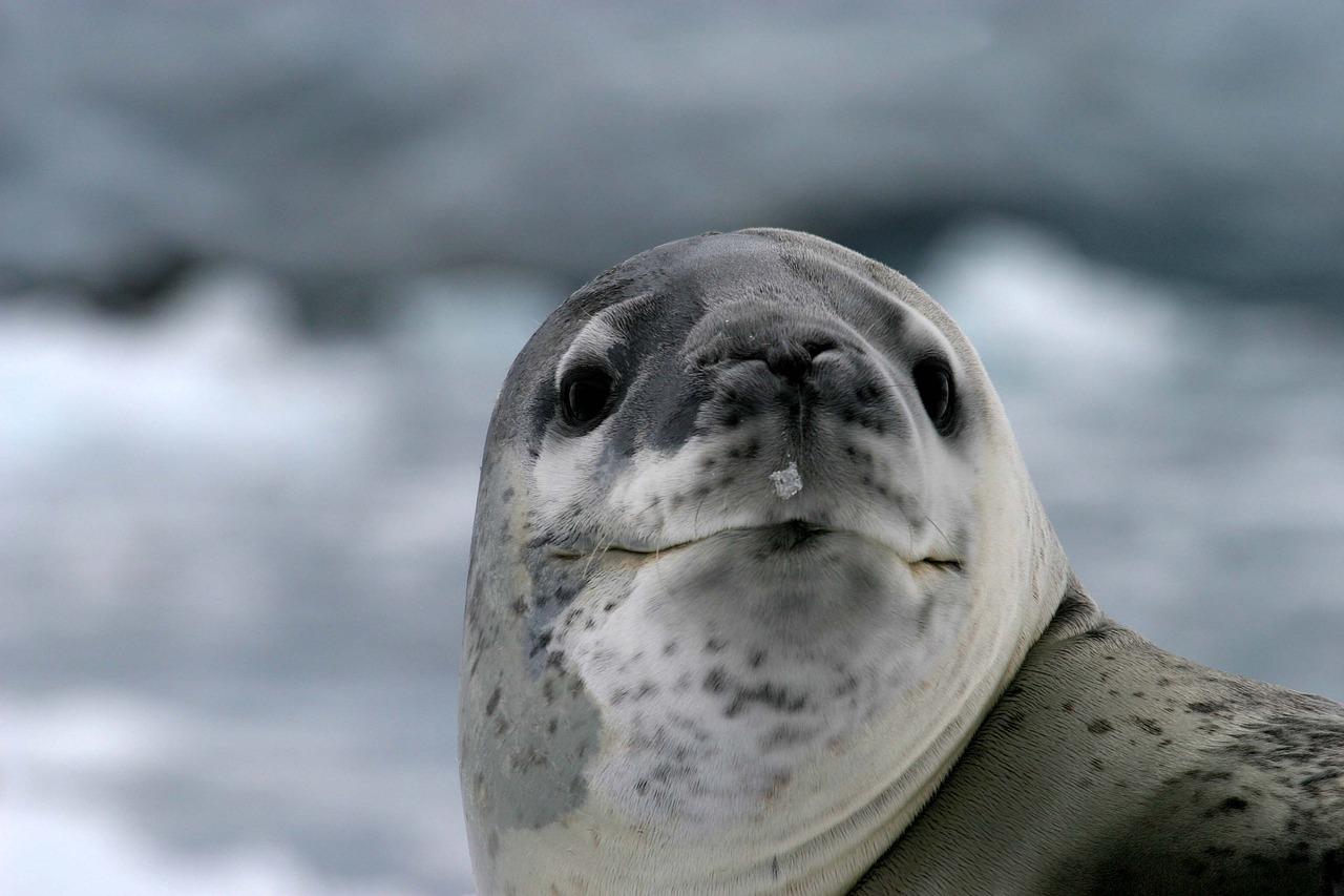 antartica_wild life_PD
