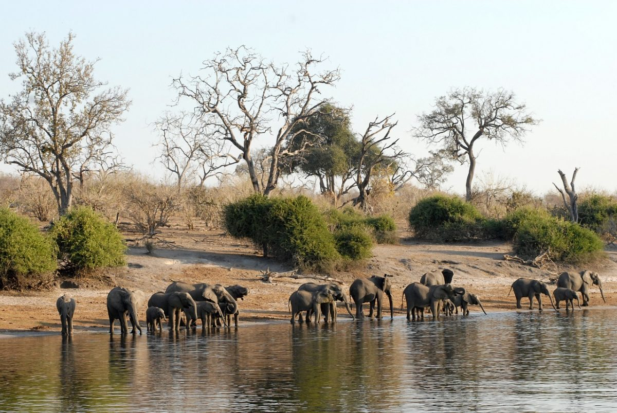 Natural Wonders in Botswana