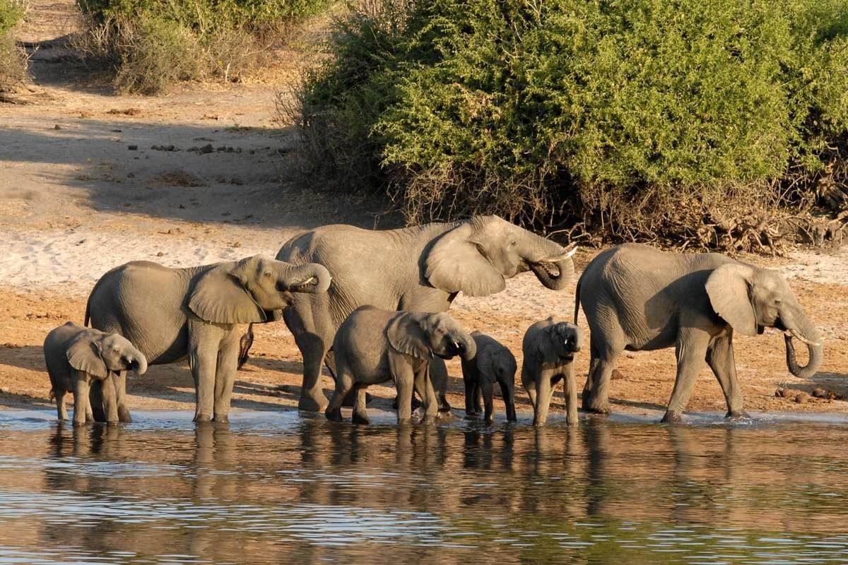 botswana-elephant-chobe-riverside_PD1