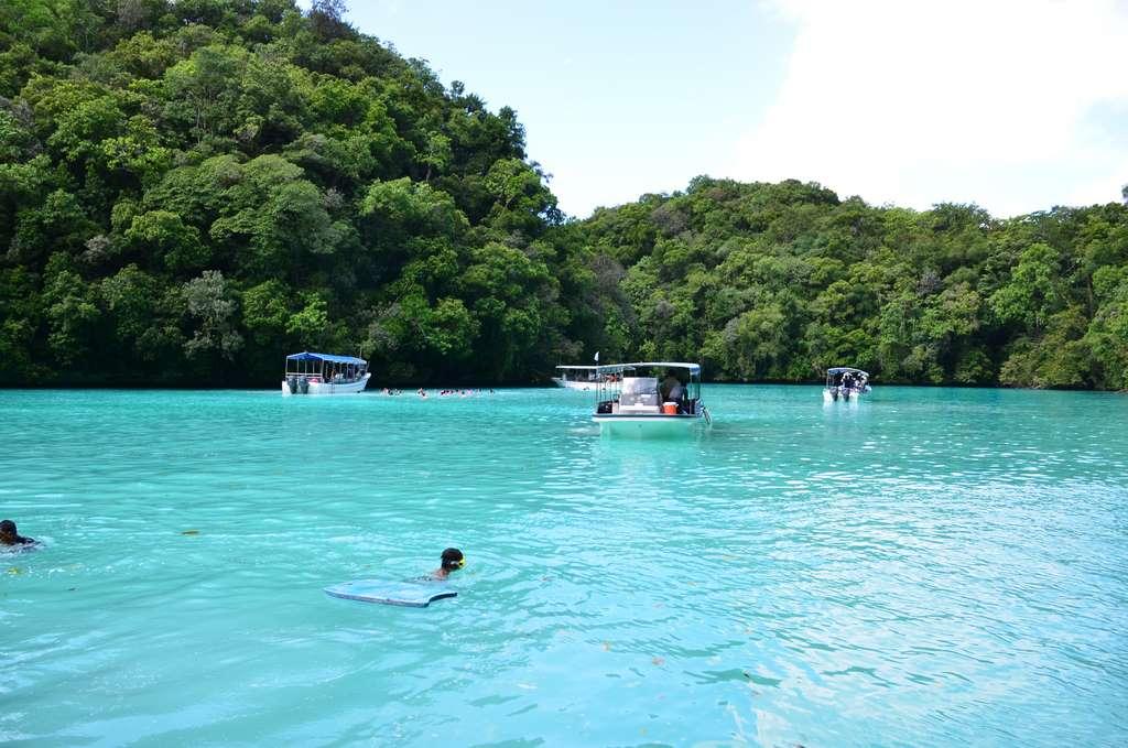 dolphin-palau-beach_PD