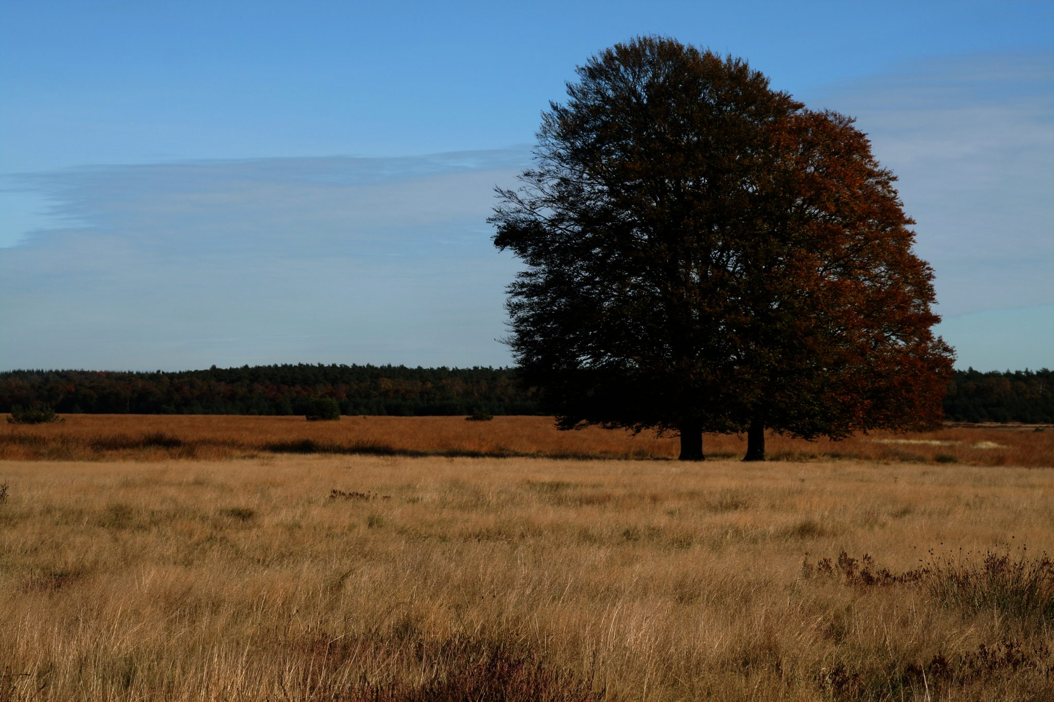 heide-tree-hiking-nature-heathland_PD
