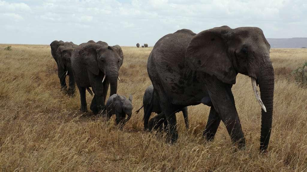 слон-серенгети-национальный-парк_PD