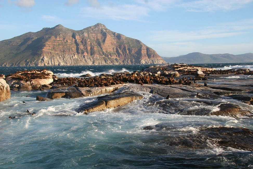Duiker Island_Cape Town South Africa_PD