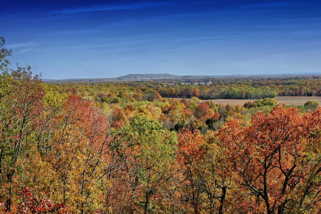 arkansas-landscape-scenic-forest