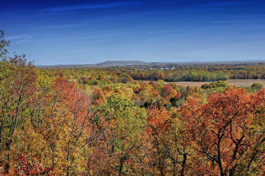 arkansas-landscape-scenic-forest