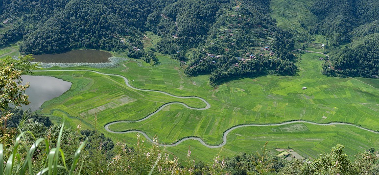 Rupa Lake and paddy fields_CCBYSA4.0