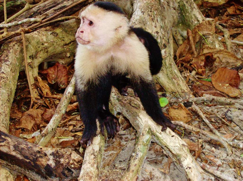 costa-rica-jungle-monkey-wildlife_PD