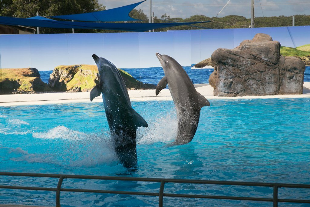 dolphins-coffs_coast-new_south_wales-australia