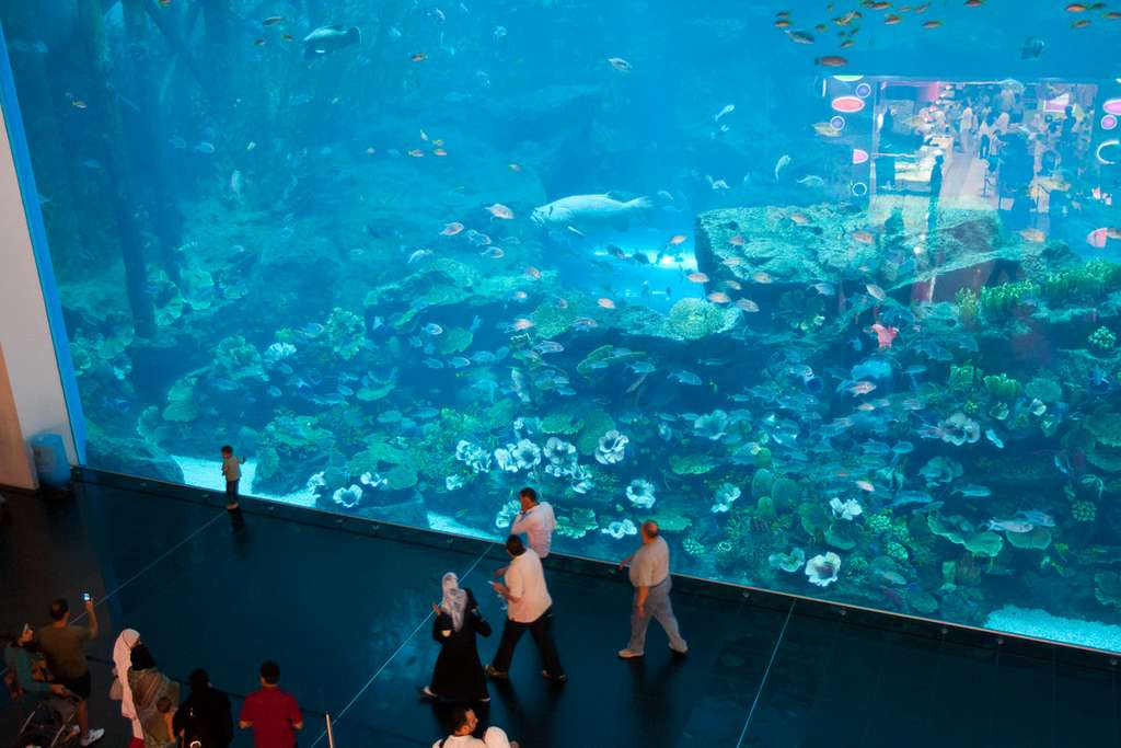 dubai-aquarium-visitors_cc