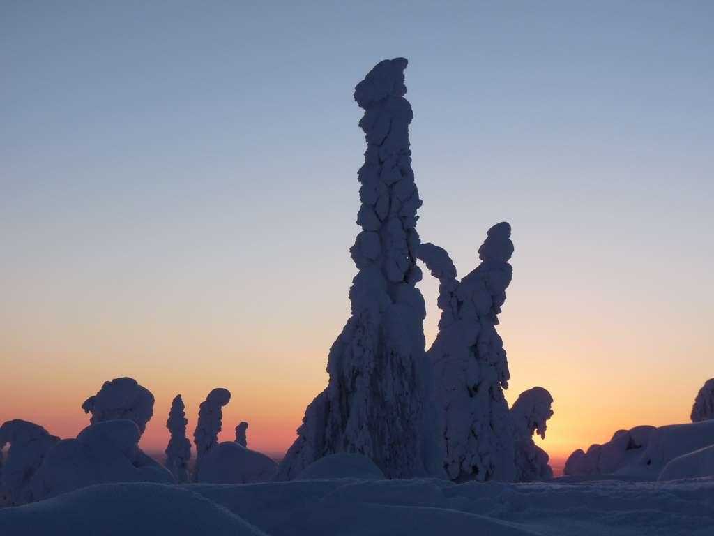 finland-snow-lapland-snow-landscape pd