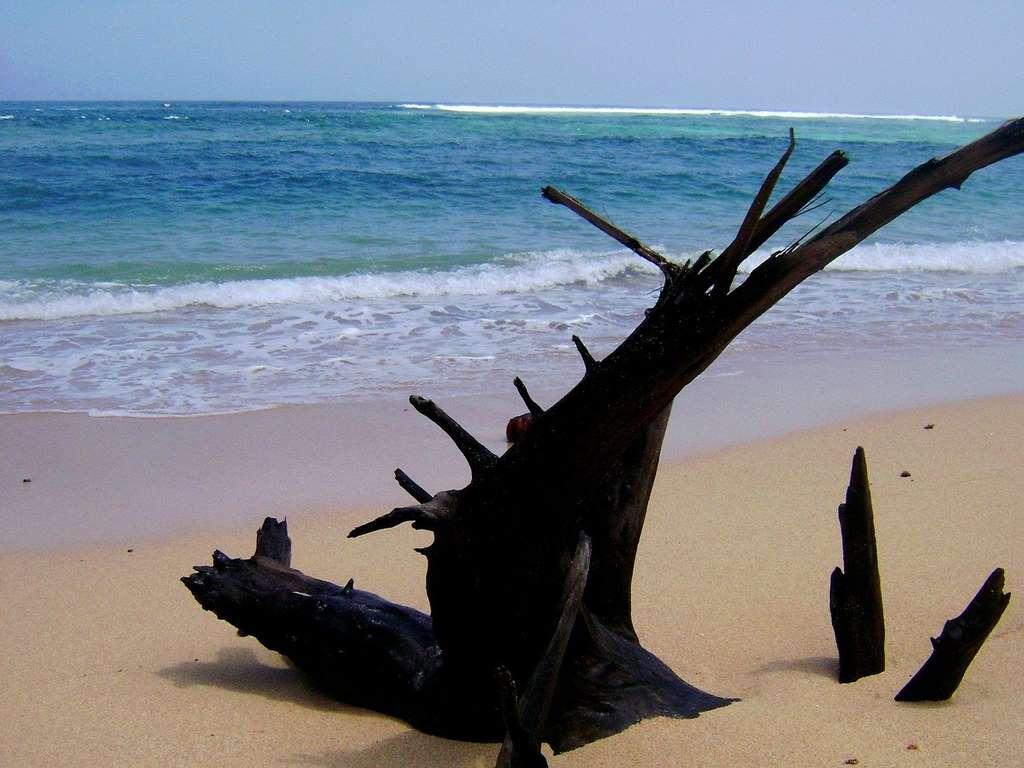 pantai-nliyep-malang-jawa-timur_indonesia_java_tourist_beach_sea_sand_nature_water_PD