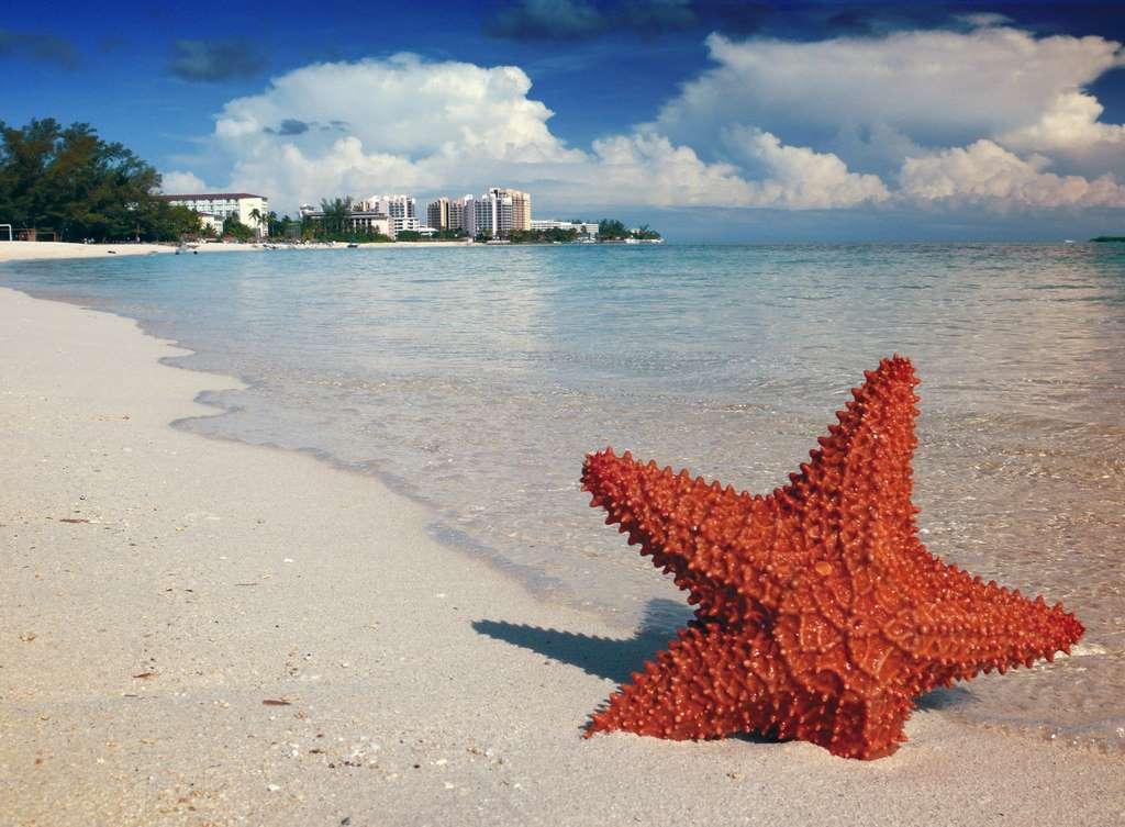 starfish-sand-bahamas-nassau-sea PD