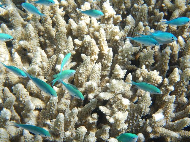 Coral reef reducing in Sri Lanka_PD