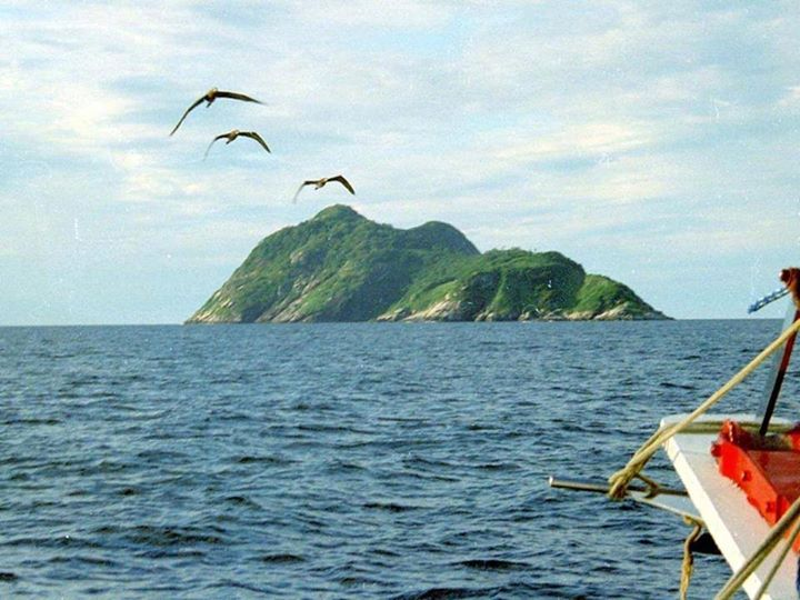 Nazino-island-sea-birds-The-cannibal-island