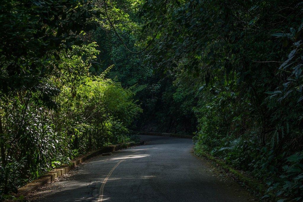forest-tijuca-rio-de-janeiro