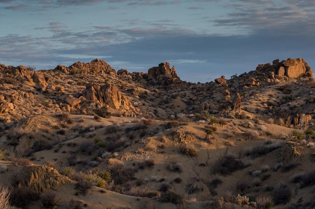 joshua-tree-national-park-california-cactus-hills-rocky-usa
