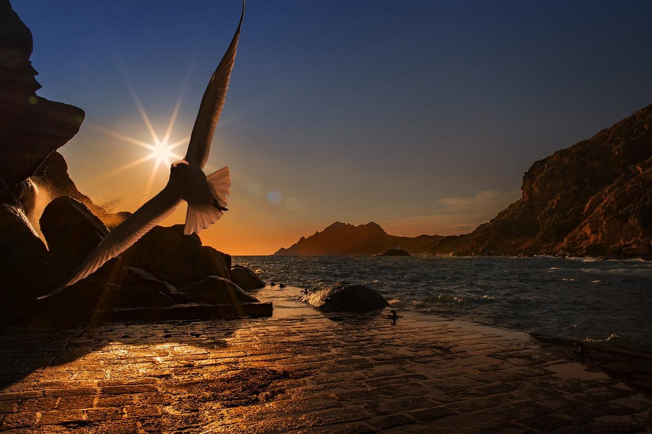 sea-seagull-bird-water_bird-ocean