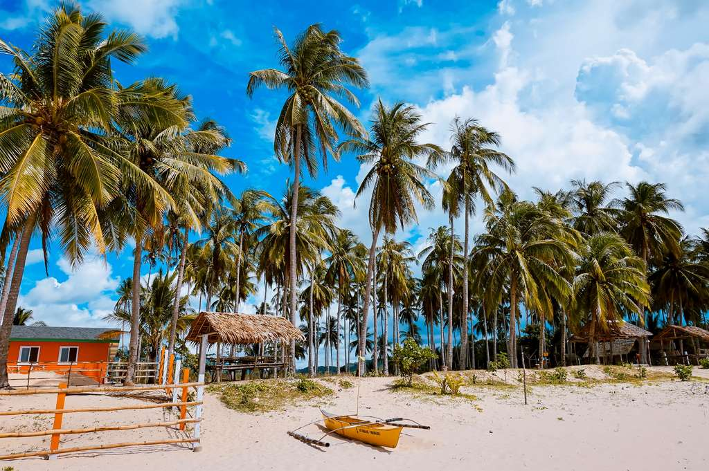 philippines-palms-palm-trees_PD