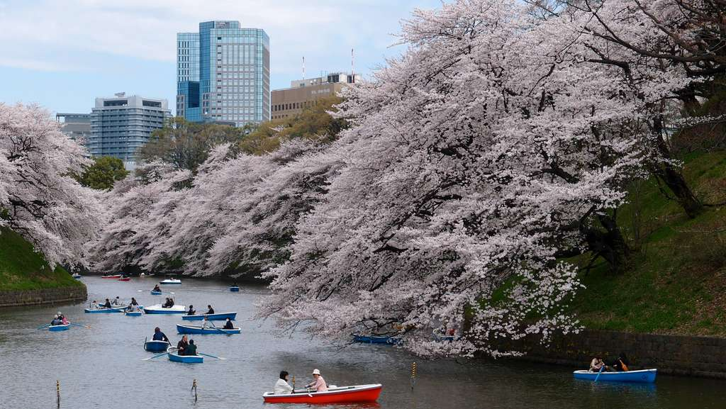 boat-cherry-blossom-park-rive_