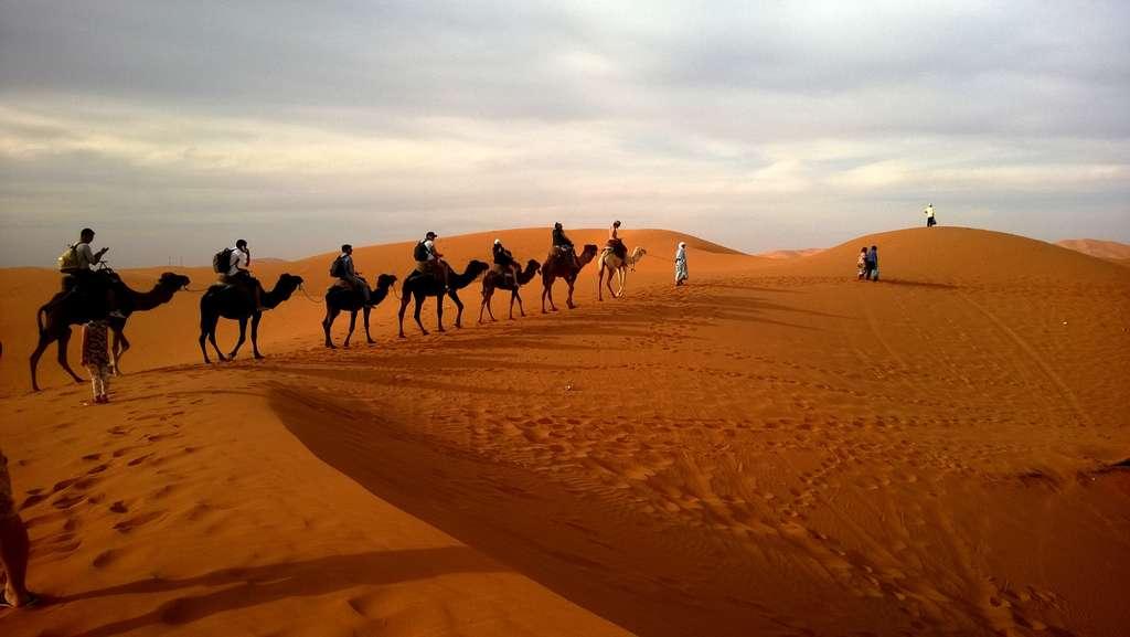 caravan-desert-safari-dune-camels_PD