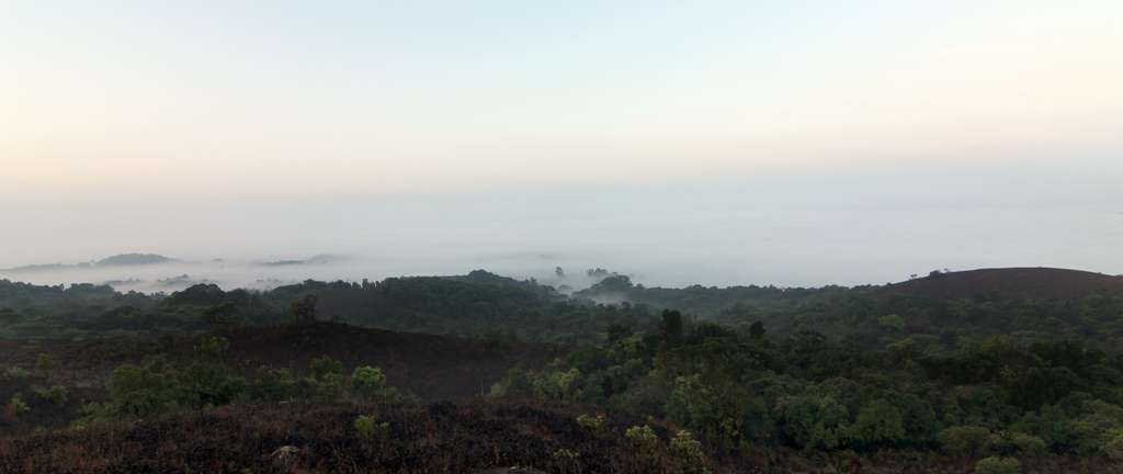 coorg-fog-forests-greenery-hills_PD