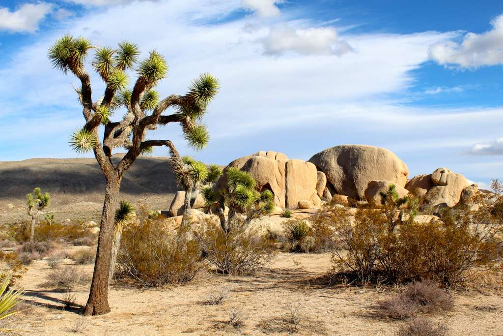 joshua-tree-national-park_PD