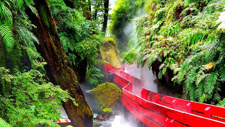 Temperate_Rainforest_Chile