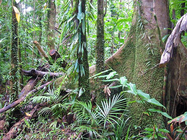 Tropical_Rainforest_Daintree_Australia