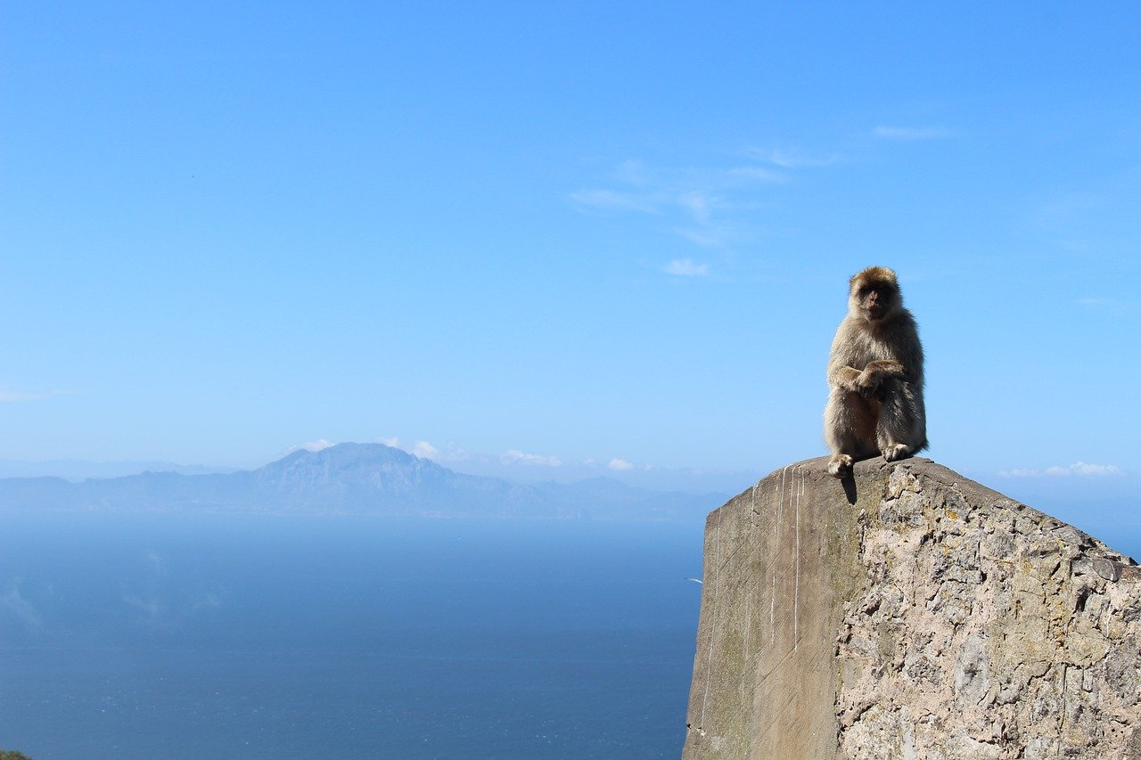 Monkey in Gibraltar_the Rock_PD