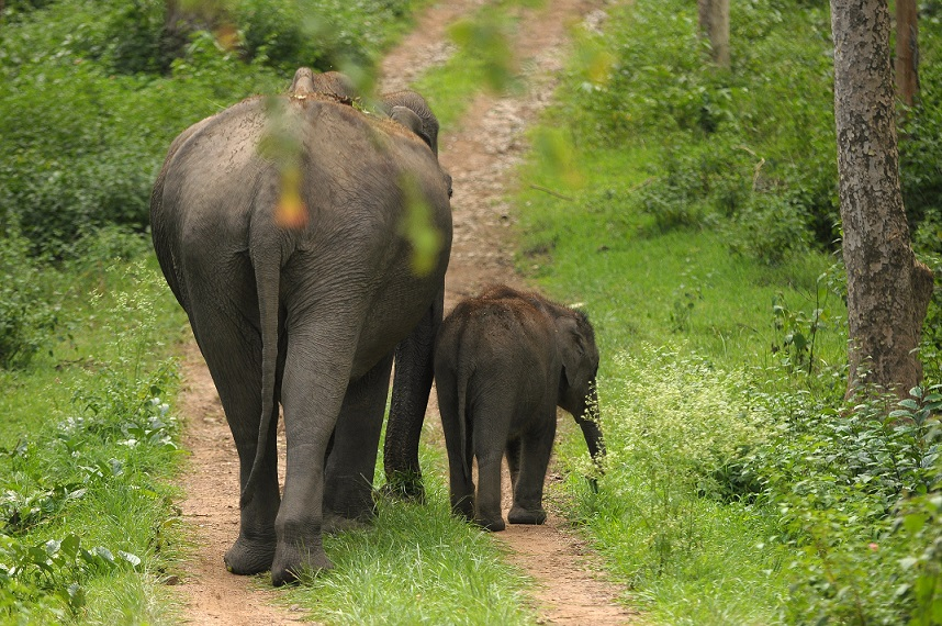 Mudumalai National Park