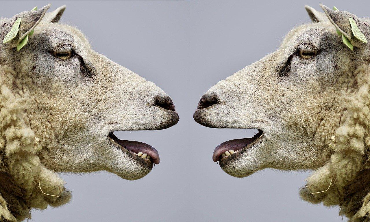 funny sheeps_memes_PD