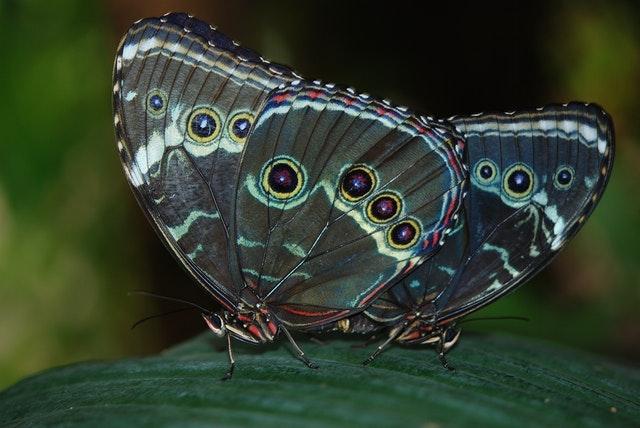 Sertoma_butterfly_house_butterflies_South Dakota