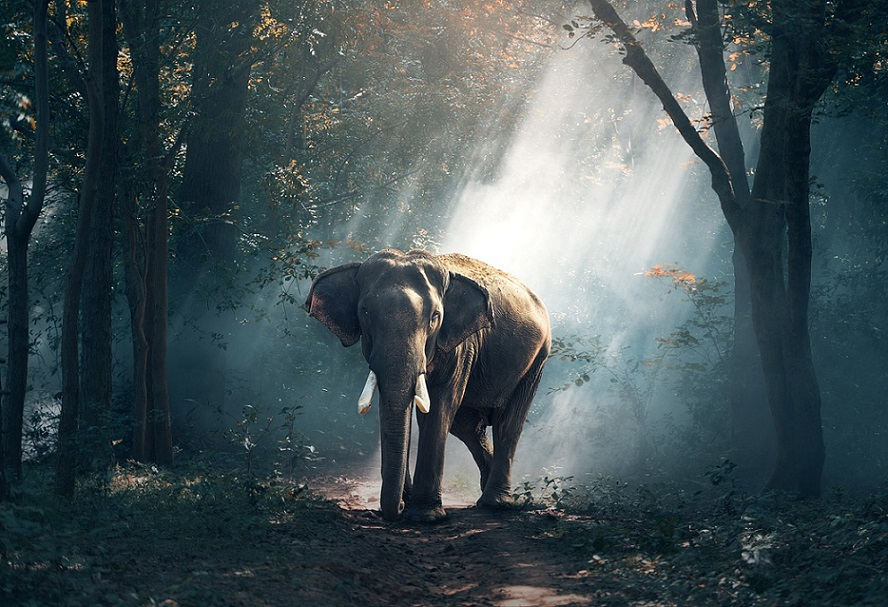 elephant_nature_wildlife_PD