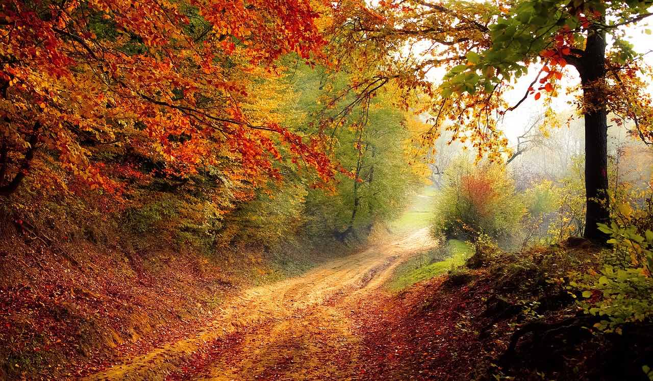 fall colors bypath, a narrow country road_greatest travel quote_PD