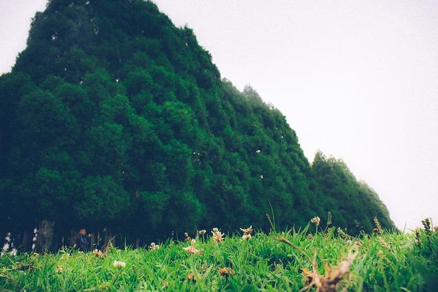 shillong nature PD
