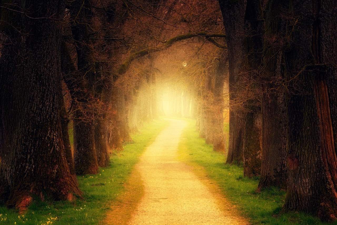great travel quotes_tree tunnel of light_PD