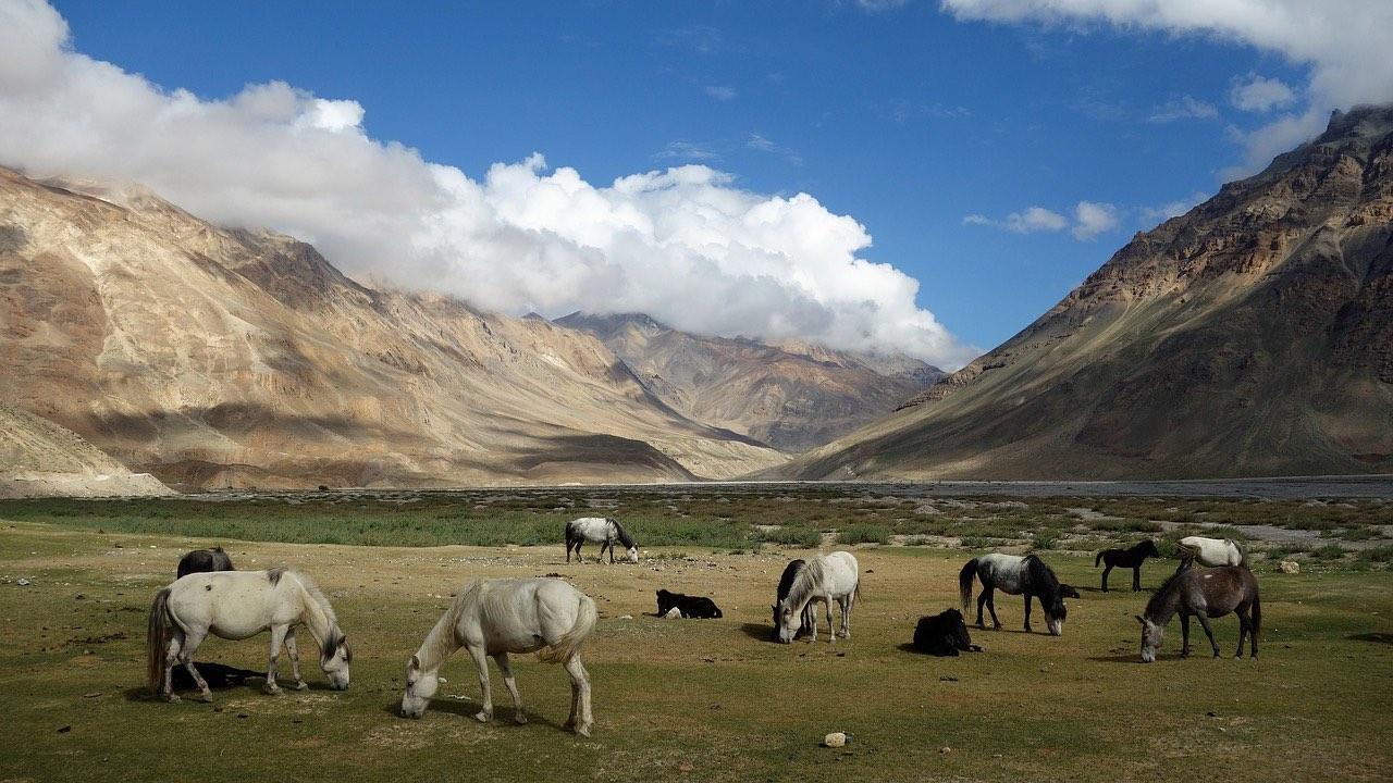 himachal_pradesh_wild horses_PD