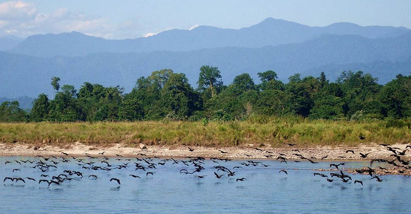 Birds flocking at Nameri National Park_Assam_CC0