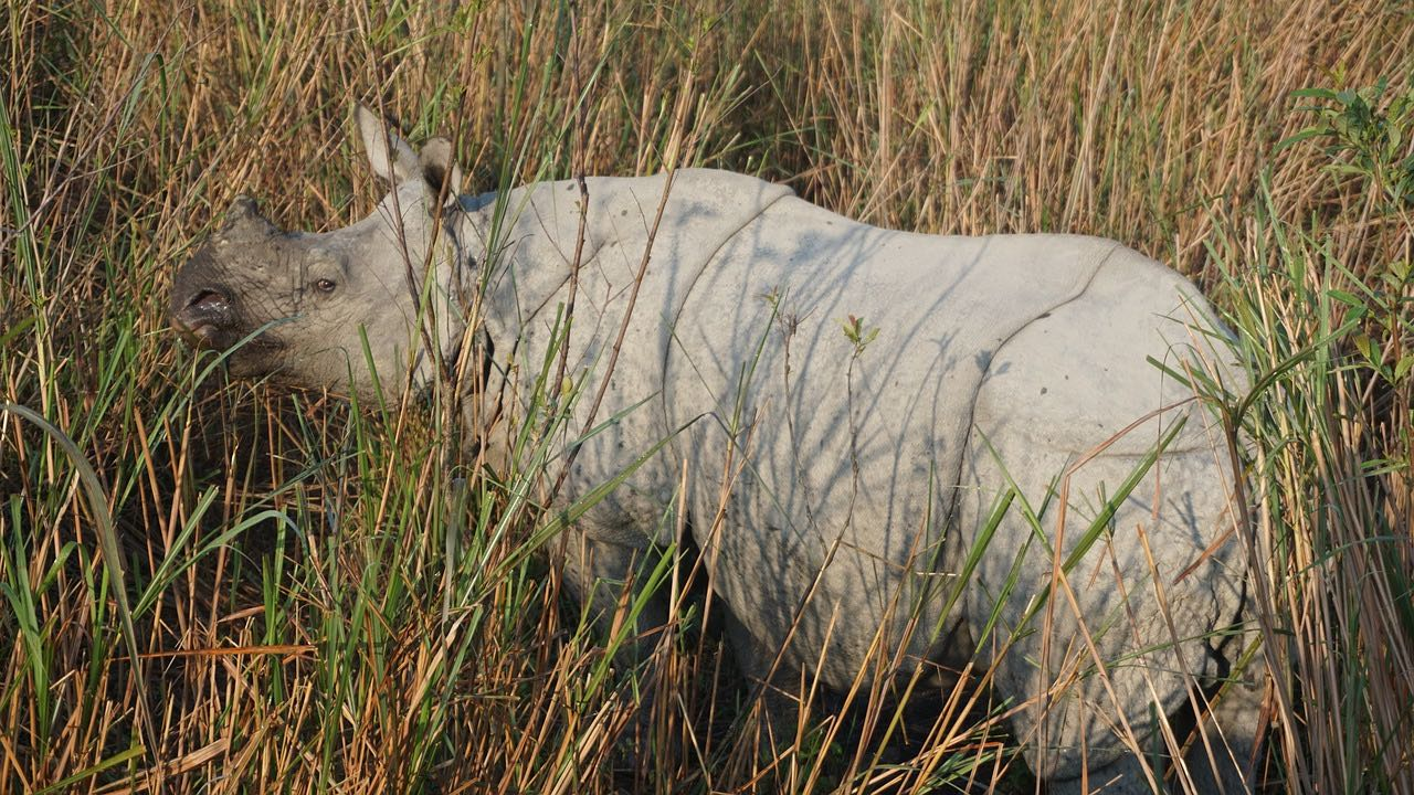 Rhinoceros Kaziranga National Park_Assam_India_PD
