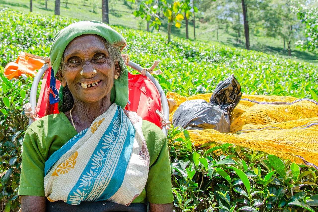 Tea picking in Nuwara Eliya_Sri Lanka_PD