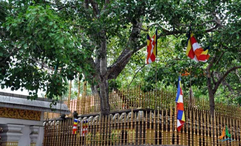 Bodhi Tree_PD