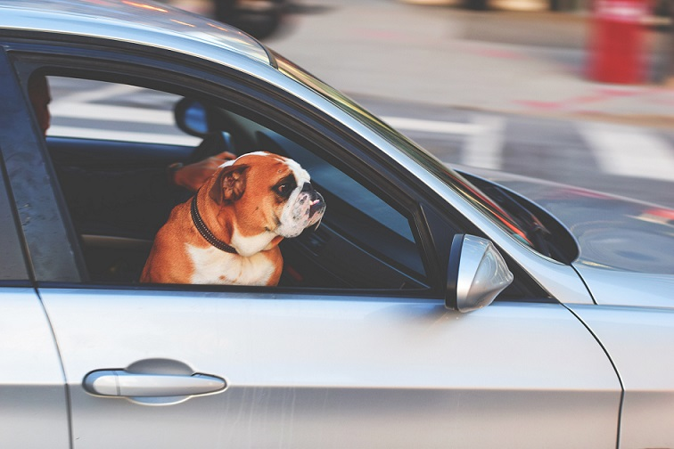Travel with pet PD