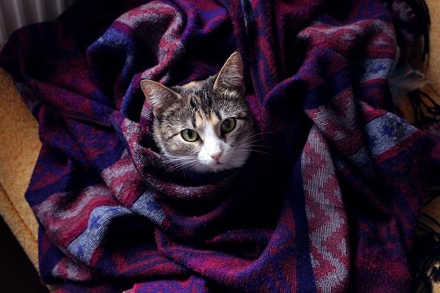 pet cat_comfort_PD