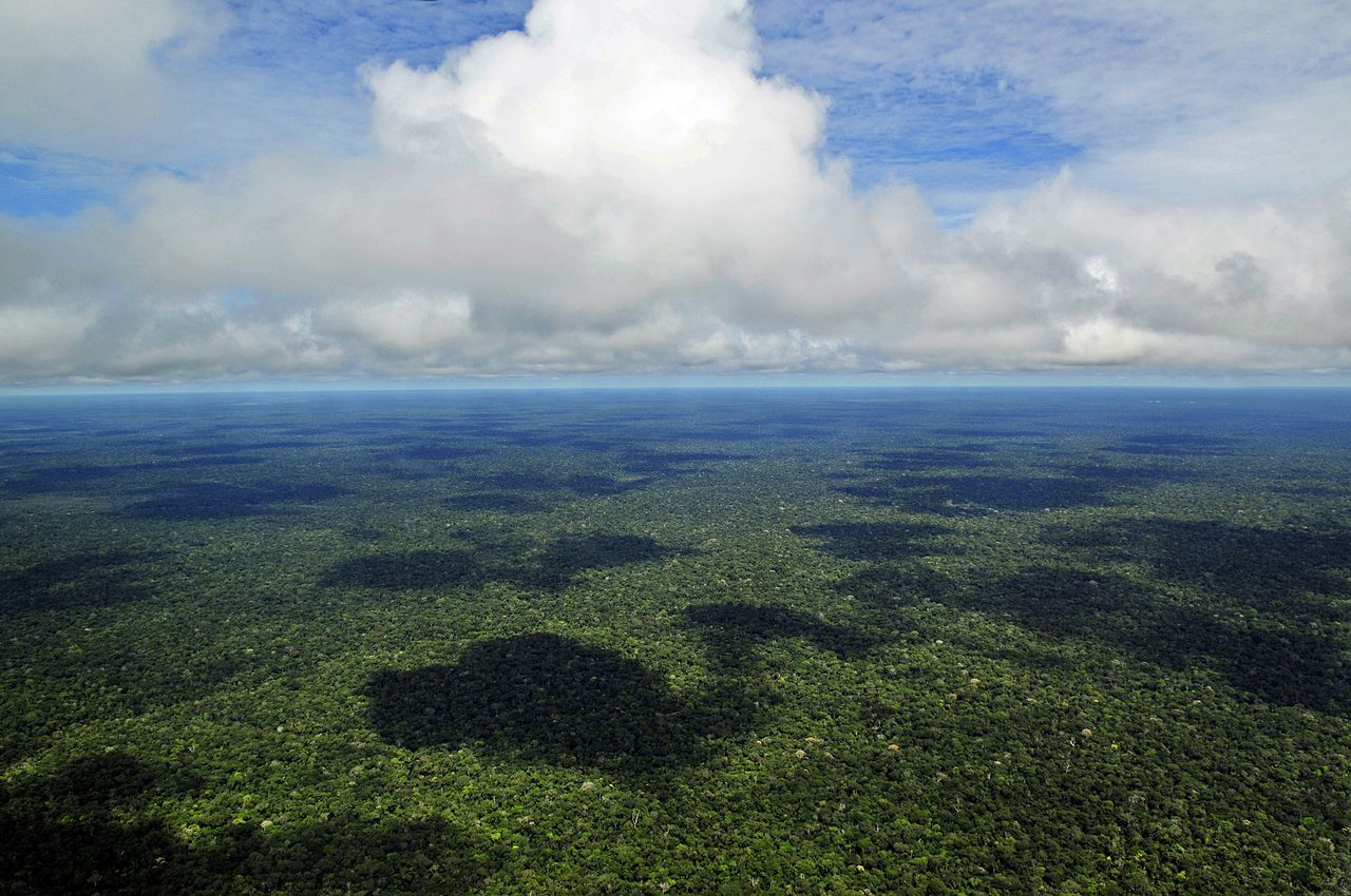 Amazon_Rainforest_CCSA2.0
