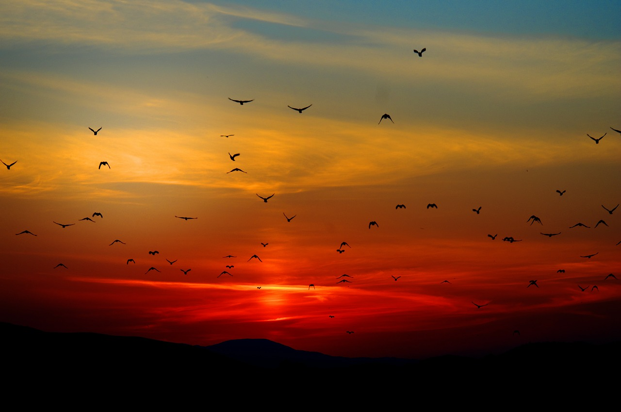 Beautiful_Sunset_Birds_Nature_PD
